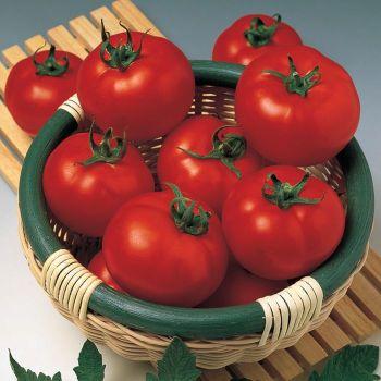 Margo Hybrid Tomato