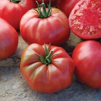 Mrs. Maxwell's Big Italian Tomato