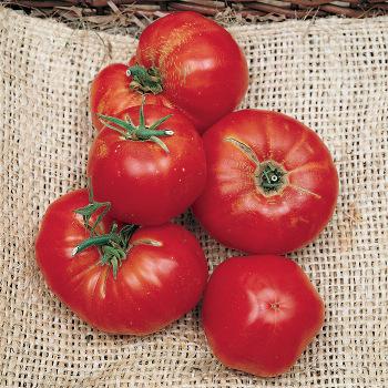 Omars Lebanese Tomato