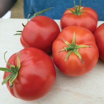 Quarter Century Tomato