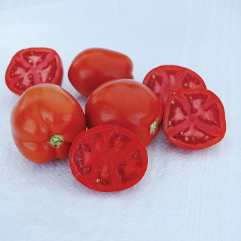 Saucy Lady Tomato