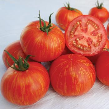 Skyreacher Tomato