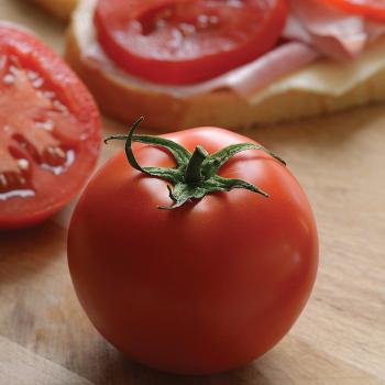 Stellar Hybrid Tomato