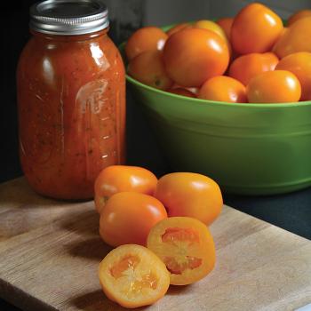 Sunrise Sauce Hybrid Tomato