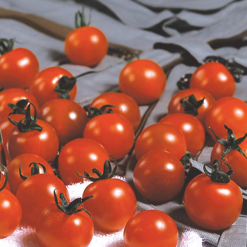 Sweet Million Hybrid Tomato - 30 seeds