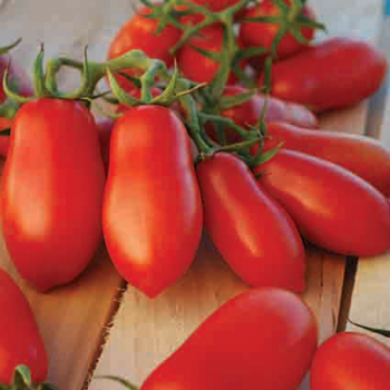 Ten Fingers Of Naples Tomato - 30 seeds