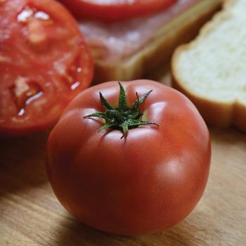 Tidy Rose Hybrid Tomato