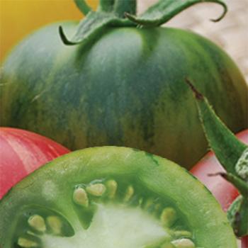 Vernissage Green Tomato