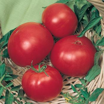 Wins All Tomato