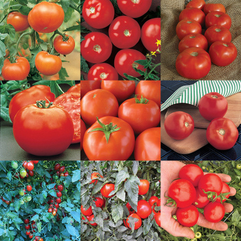 Mountain Series Tomato Collection