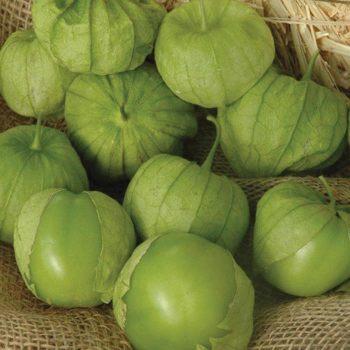 Tamayo R Hybrid Tomatillo