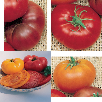 Brandywine Tomato Collection