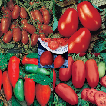 Best Paste Tomato Seed Collection