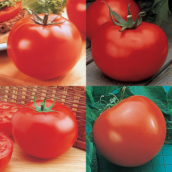 Fantastic Tomato Collection