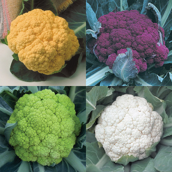 Colorful Cauliflower Collection