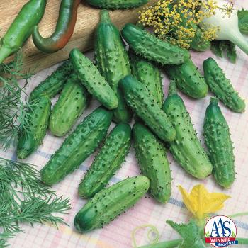 Parisian Gherkin Hybrid Cucumber