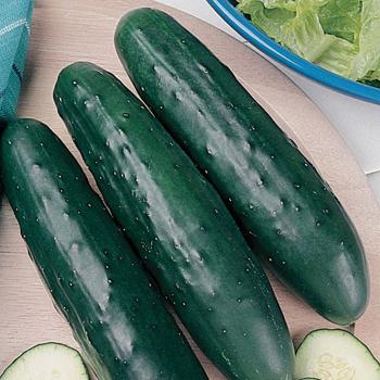 Fanfare Hybrid Cucumber
