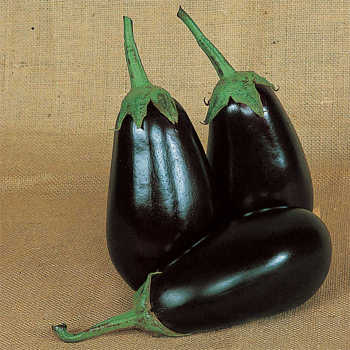 Grafted Epic Hybrid Eggplant