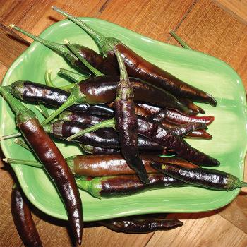 Cayenne Purple Pepper