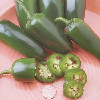 Fooled You Hybrid Jalapeno Pepper