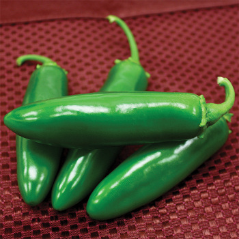 Spicy Slice Hybrid Jalapeno Pepper