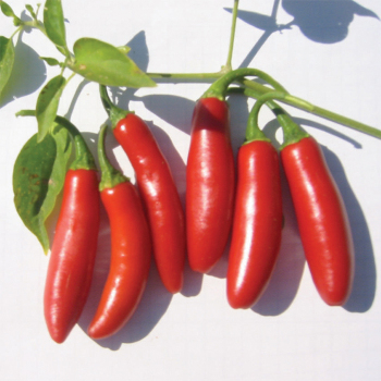 Serrano Tampiqueno Pepper