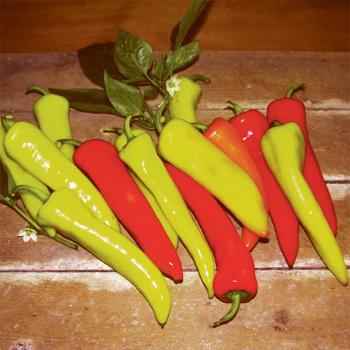 Stoked Hybrid Pepper