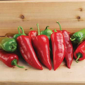 Chervena Chushka Fresno Pepper