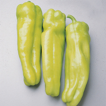 Cubanelle Pepper