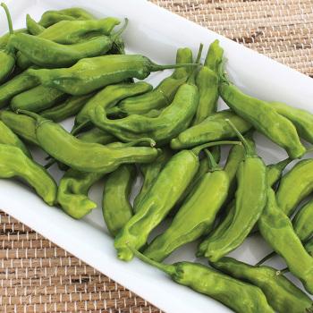 Takara Hybrid Pepper