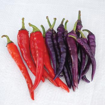 Buena Mulata Pepper
