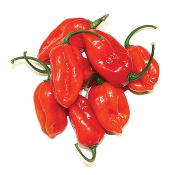 Xaman Rojo Hybrid Pepper