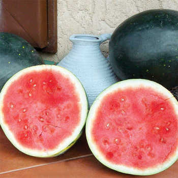 Harvest Moon Hybrid Watermelon