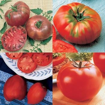 Mighty Mato Tomato Sampler