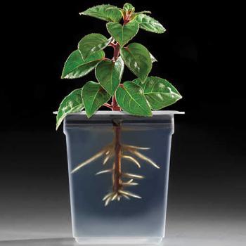 Gel 2 Root 2 Pot Pack