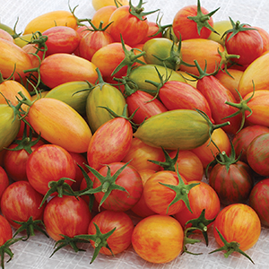 Open Pollinated Cherry Tomato Seeds