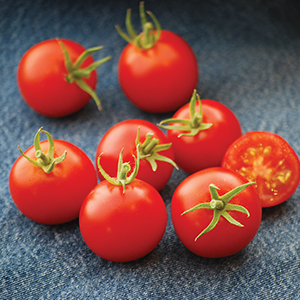 Medium-Small Open Pollinated Tomato Seeds