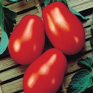 Medium-Small Open Pollinated Tomato Plants