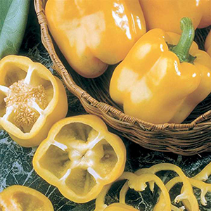 Sweet Bell Pepper Plants