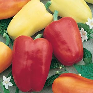 Sweet Bell Pepper Seeds