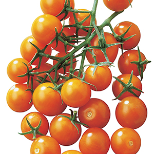 Cherry/Grape Tomato Seeds