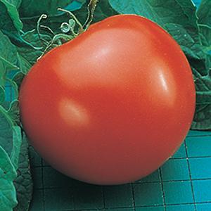 Goliath Tomato Seeds
