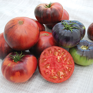 Indigo Collection Tomato Seeds