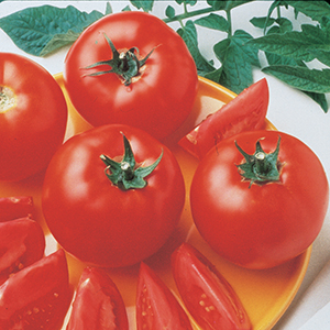 Medium-Large Tomato Seeds