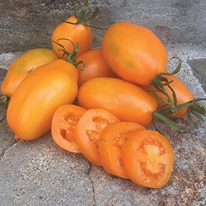 Paste Tomato Seeds