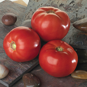 Spotted Wilt Virus Resistant Tomato Seeds
