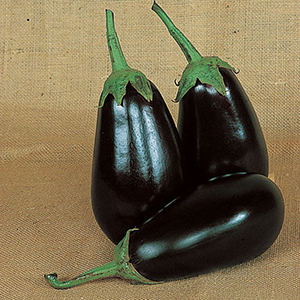 Eggplant Plants