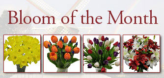 Fresh Cut Flowers & Spring Flowering Bulbs: Tulips.com - photo #49