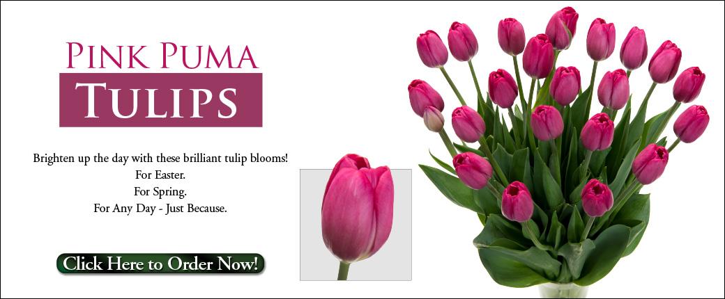 Fresh Cut Flowers & Spring Flowering Bulbs: Tulips.com - photo #22