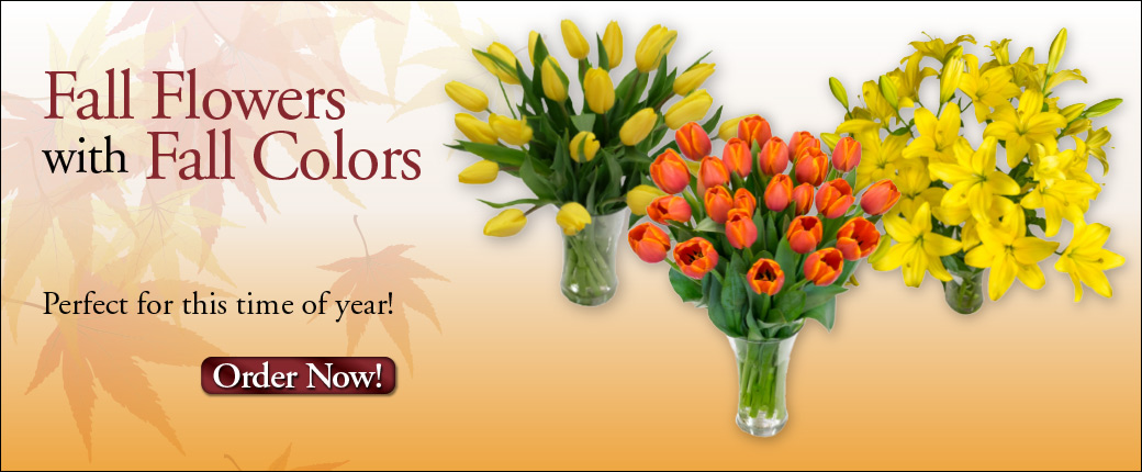 Fresh Cut Flowers & Spring Flowering Bulbs: Tulips.com - photo #24